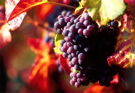 vin-français-louis-françois-rouen-paris