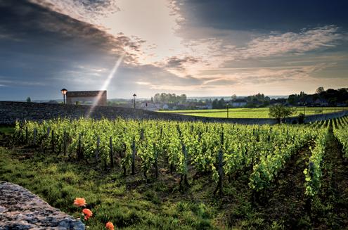 vin_français-louis_françois-rouen-paris